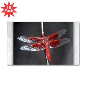 Sticker (Rectangle) (10 Pack) Red Flame Dragonfly
